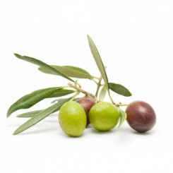 fresh-olives-bella-di-cerignola